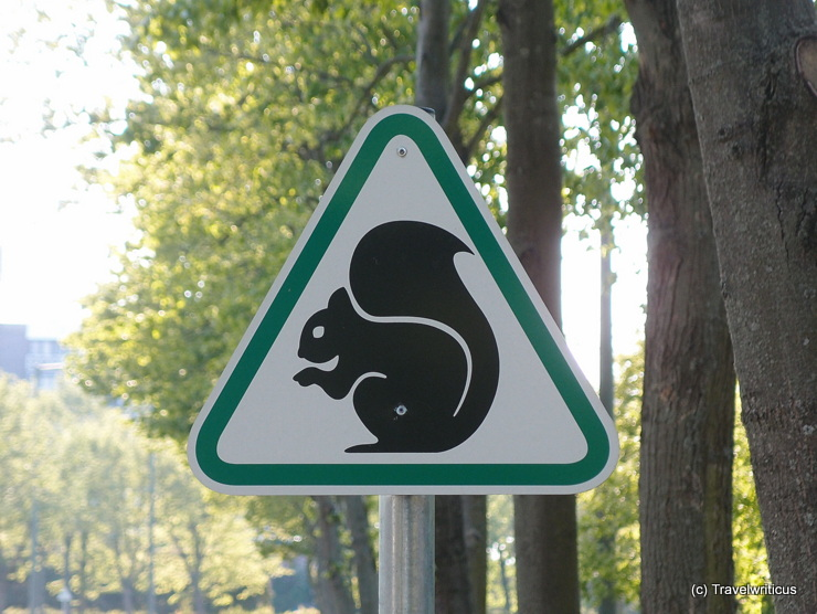 'Beware of the squirrel' in Bük, Hungary