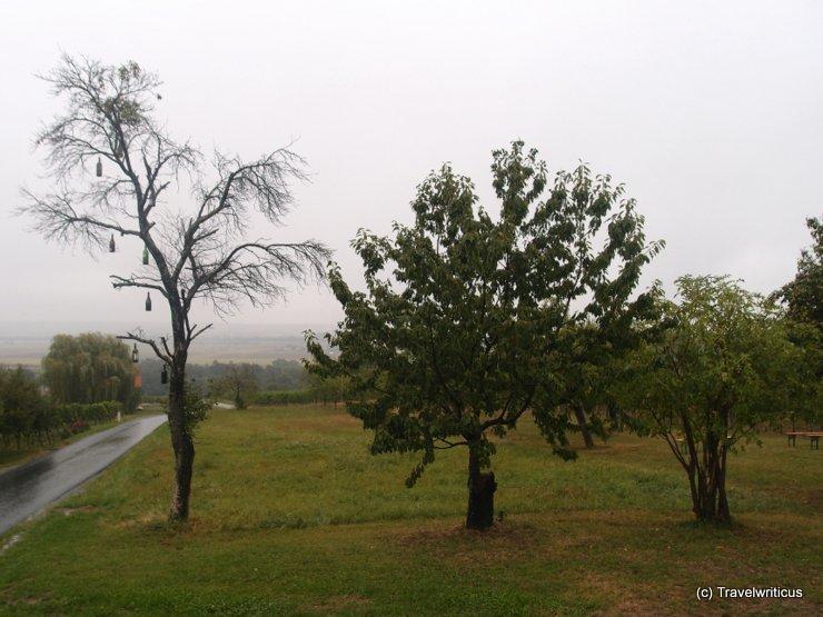 Odd tree at the Wohnothek in Deutsch Schützen-Eisenberg, Austria