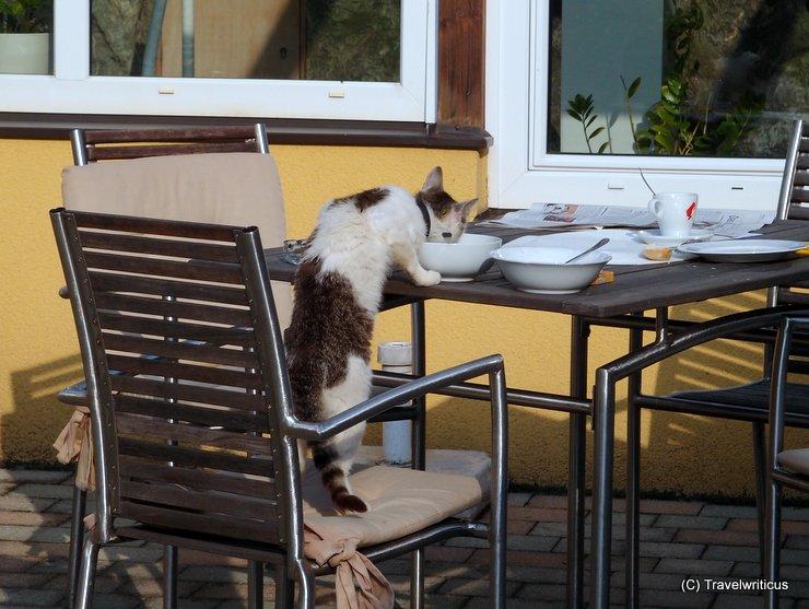 Cat having breakfast