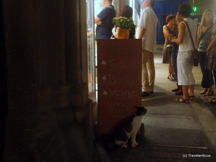 Cat at ice cream shop in Graz, Austria