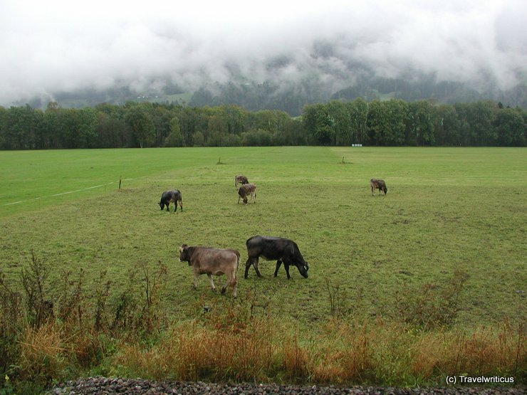 Pasture next to a railway line in Austria