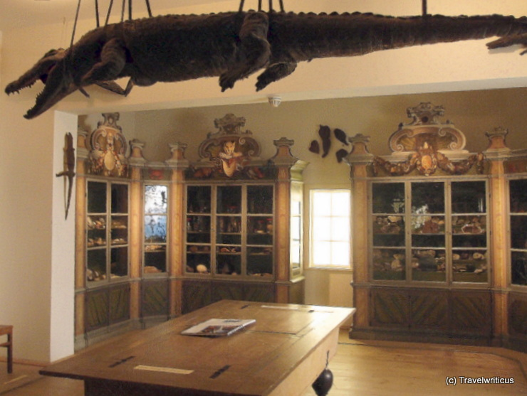 Crocodile at the cabinet of curiosity in Halle (Saale)
