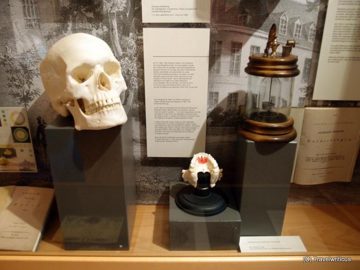 Johann Wolfgang von Goethe and the incisive bone in Jena, Germany