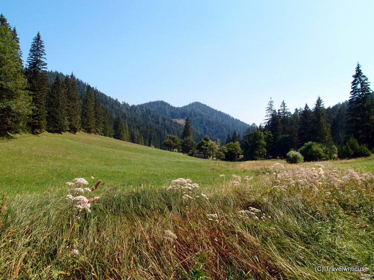 Scenery along the nature trail about herbs in Mariazell, Austria