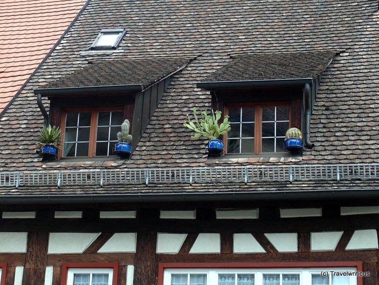 Cactuses in Überlingen, Germany