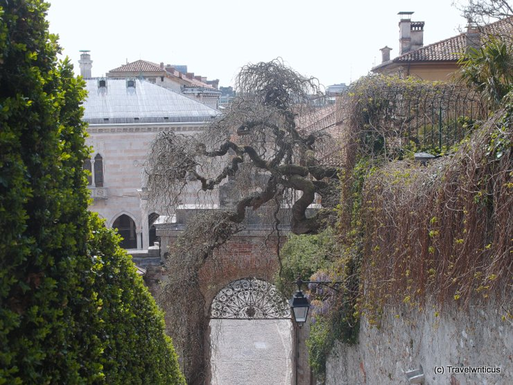 A weird tree in Udine, Italy